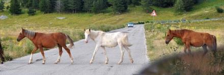 Crossing Horses
