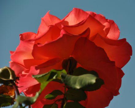 Va' a rivedere le rose. Capirai che la tua e' unica al mondo